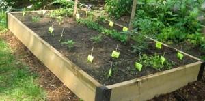 Urban Survival Garden